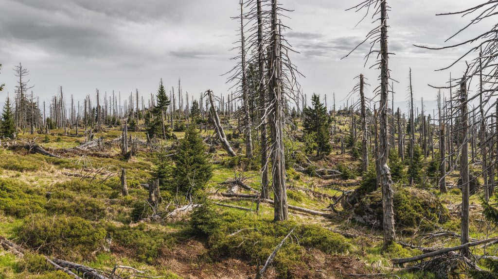 forest after a disaster